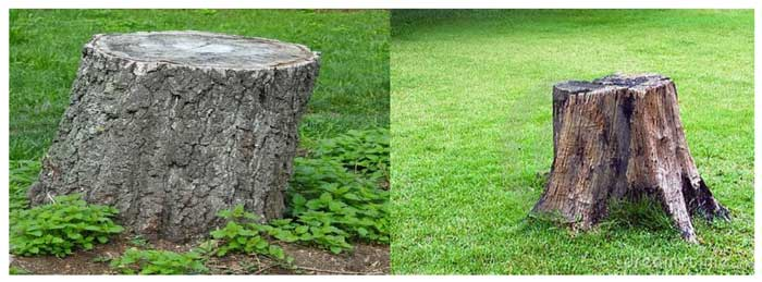 Backyard Essentials: Important Things to Know When Using a Stump Grinder